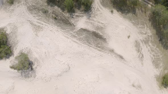Thumbnail for Sand Dunes with Trees on Baltic Sea Coast