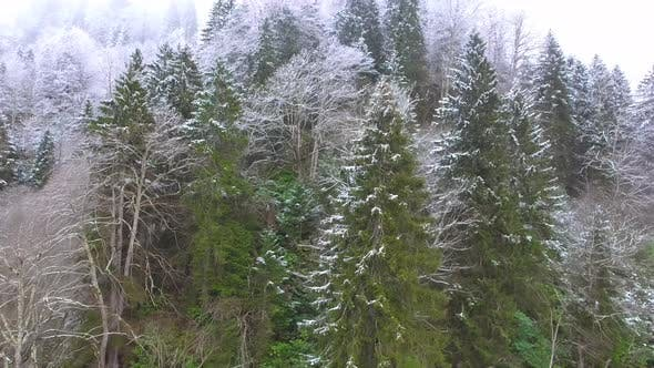 Thumbnail for Hoarfrost Dew Formation on Forest