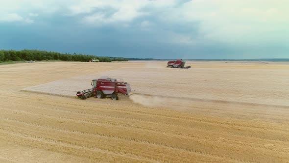 Thumbnail for Landwirtschaftliche Mähdrescher Ernte Weizen Auf dem großen Feld.