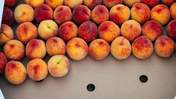 An Animation of Filling a Crate with a Fresh Crop of Peaches