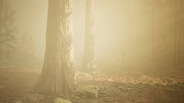 Thumbnail for Autumn Forest and Trees in Morning Fog