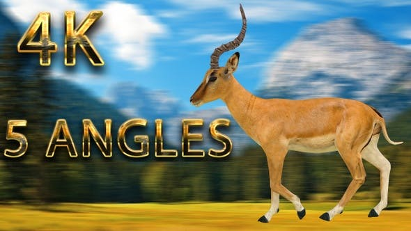 Thumbnail for Impala walking from 5 different angles