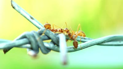 Ants were kissing on the wire