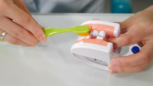Thumbnail for Oral Hygiene for Dental Braces. Orthodontic Treatment Concept. Teaching Dental Care. Dentist Showing