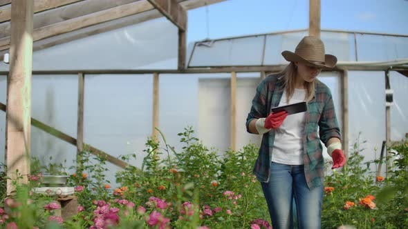 Thumbnail for A Florist with a Tablet Computer Walks in a Greenhouse and Audits and Checks Flowers for Small