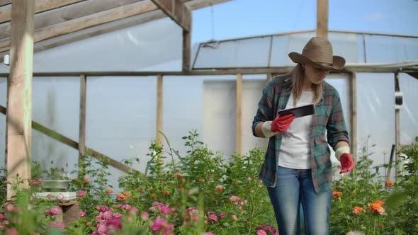Thumbnail for Ein Florist mit einem Tablet Computer Spaziergänge in einem Gewächshaus und Audits und Kontrollen Blumen für kleine