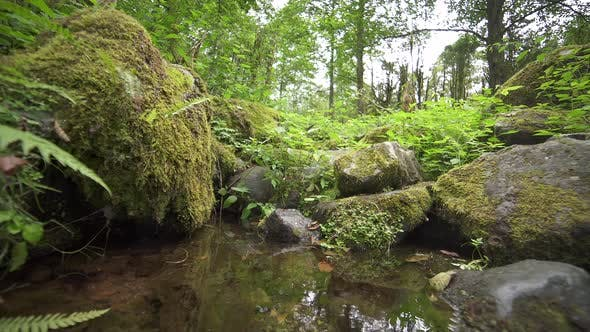 Thumbnail for Water Supply in the Forest