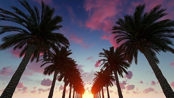 Palms Sunset