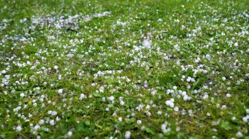 Large Hail Falls on the Green Grass