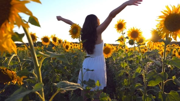 Thumbnail for Young Girl Standing at the Field of Sunflowers and Raising Her Hands Up. Woman Enjoy By Landscape