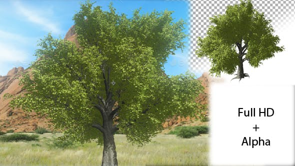 Thumbnail for Tree Growing
