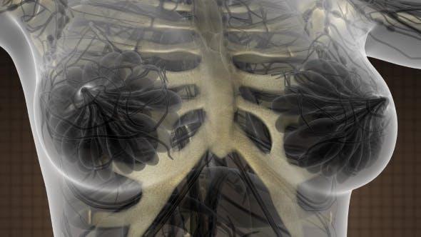 Thumbnail for Human Body with Visible Skeletal Bones