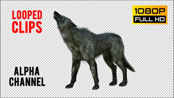 Thumbnail for Wolf 6 Realistic Pack 3