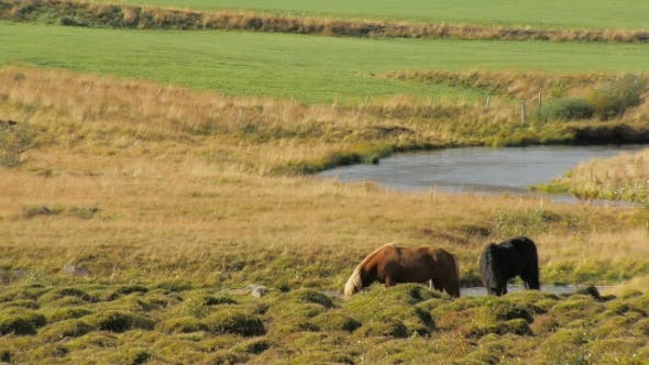 Thumbnail for Landscape of Icelandic Pasture with Two Horses, Sunny Weather, Small Bird Is Sitting on a Red Horse