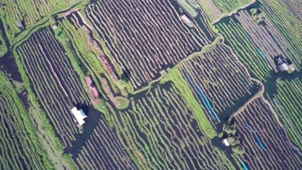 Thumbnail for Flying Over Floating Gardens on Inle Lake, Myanmar