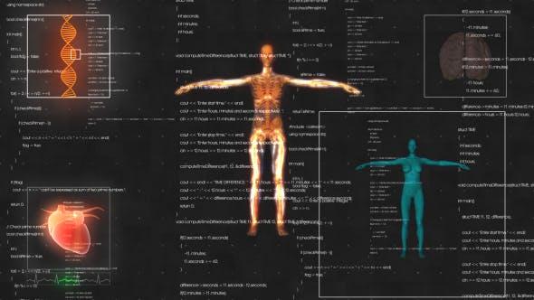Female Anatomy Medical HUD Animation