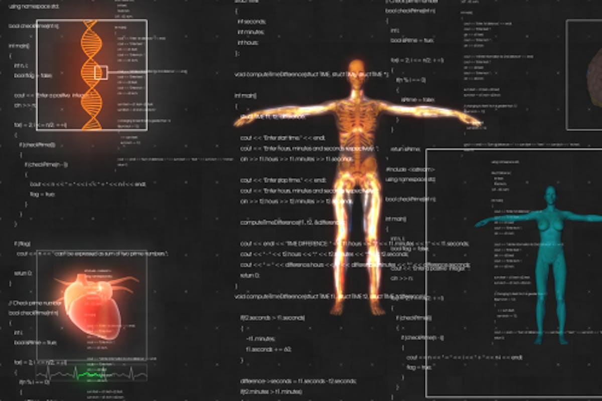 Female Anatomy Medical HUD Animation by turalmammadzada on Envato ...