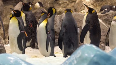 Pinguins in the Zoo