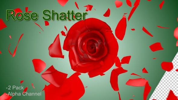Thumbnail for Rose Shatter