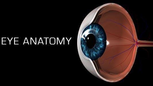Thumbnail for Eye Anatomy
