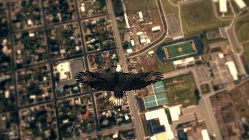 Flying Eagle Point of View - City