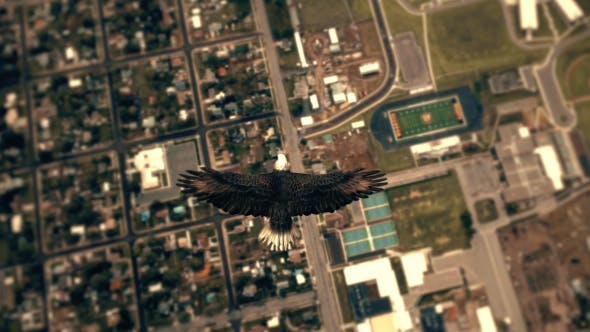 Thumbnail for Flying Eagle Point of View - City