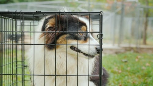 A Sad Dog Sits in a Cage. Adopting a Pet Concept