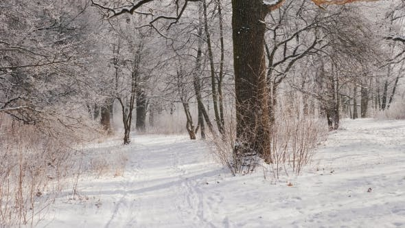 Thumbnail for The Path in the Winter Forest, the Camera Is Moving, the View From the First Person