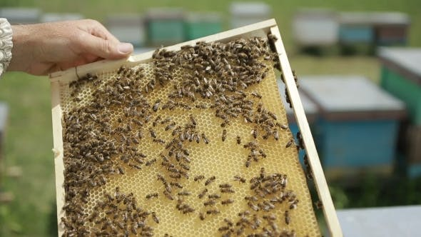 Cover Image for Beekeeper At Hive On An Apiary