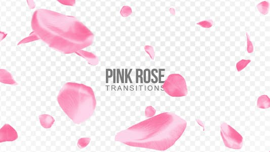 Thumbnail for Pink Rose Transitions