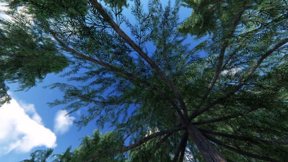 Thumbnail for Below Trees 1