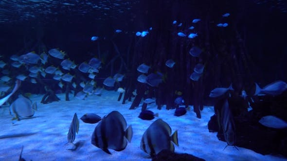 Thumbnail for Underwater World - Sea, Ocean, Fish, Coral