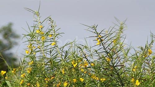 Yellow Wild Flower II