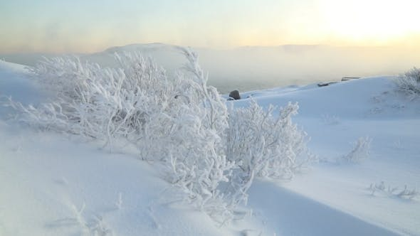 Trees in Frost in Severe Frost on the Shores of the Arctic Ocean