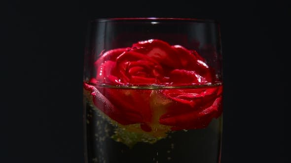 Thumbnail for Red Rose Bud Lies in a Glass of Champagne on Black Background