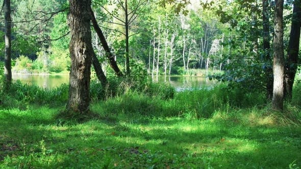 Thumbnail for Wilder Wald und See am sonnigen Tag.