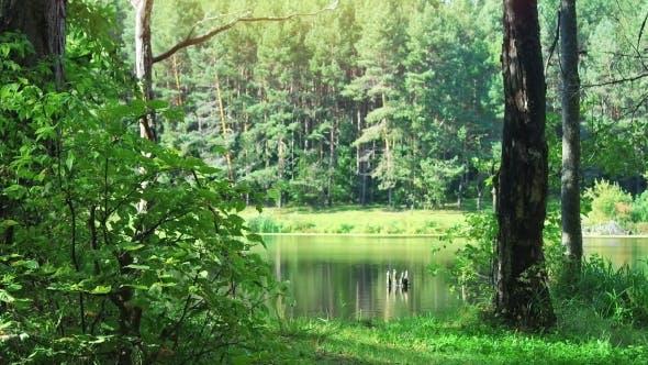 Thumbnail for Wilder Wald und See am schönen Tag
