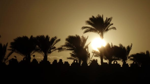 Thumbnail for Sunrise on the Beach Around the Ocean and Palm Trees.