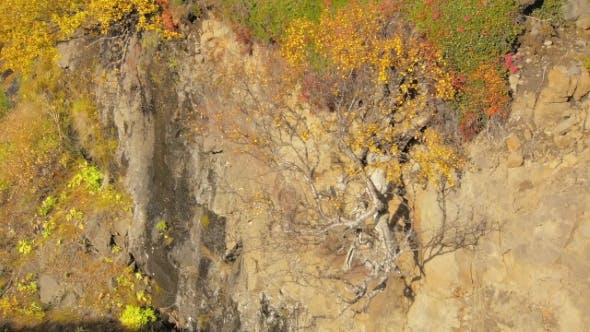 Thumbnail for Small Yellowed Nordic Birch Is Growing From Rocks Slope