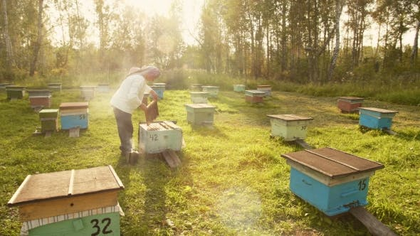Cover Image for The Beekeeper Gets a Frame From the Hive.