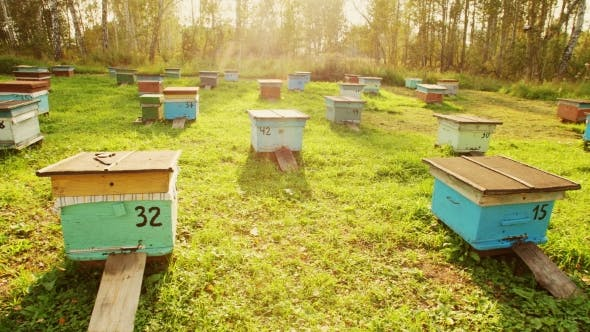 Cover Image for A Number of Bee Hives at Sunset