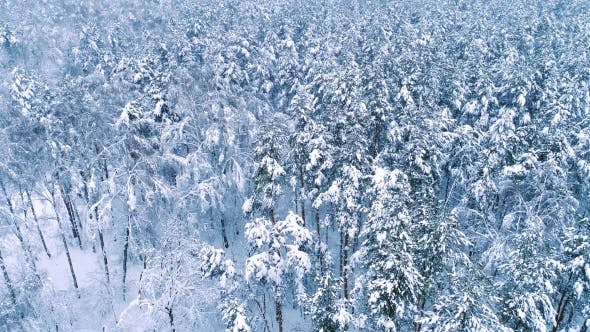 Snowy Branches in Forest. Winter Fairy Background