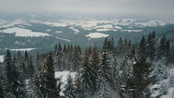 Thumbnail for Flight Over Winter Mountains, Alpine Meadow - Hills Covered with Huge Pine Trees. Skiers Are