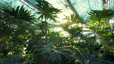 Forest in Greenhouse