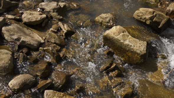 Thumbnail for Fresh Creek Water in Forest