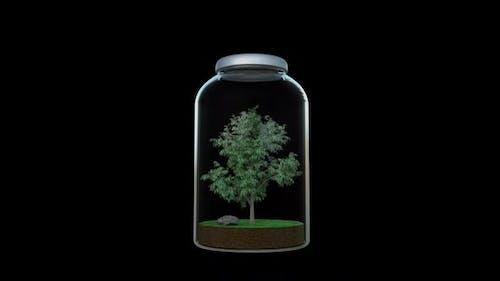 Growing Tree in the Jar