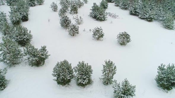 Cover Image for Aerial View of Winter Snowy Forest