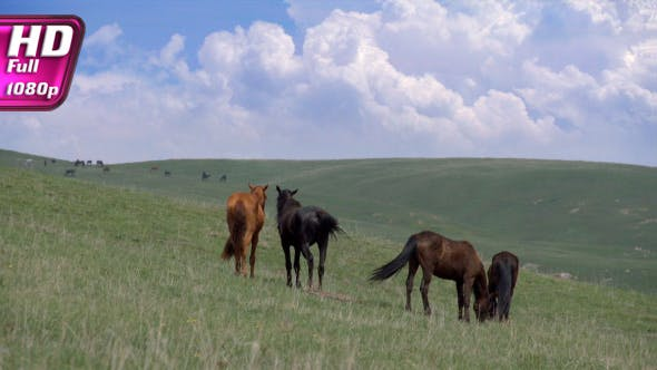 Thumbnail for Horses on a Hilly Pasture