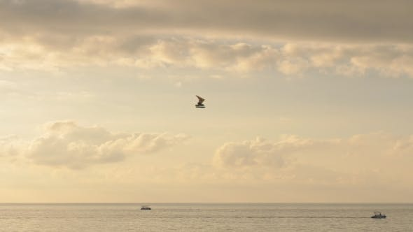 Thumbnail for Hang-gliding Over the Black Sea