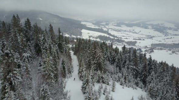 Thumbnail for Aerial View of a Skier Moving Through a Forest Among Pine Trees. Birds Eye View Above White Powder